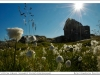 arctic-greenland-cotton-grass