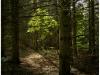 Bruce Trail - Boyne River Provincial Park, Ontario