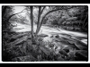 Ontario - Oxtongue Rapids Park - black and white