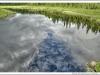 south river; tom thomson; moose photo; voyageur quest
