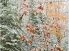 late fall snows; fall colours; Muskoka ontario