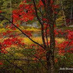 web-front-red-leaves